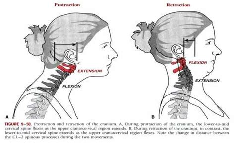 muscles of hip joint movements protraction