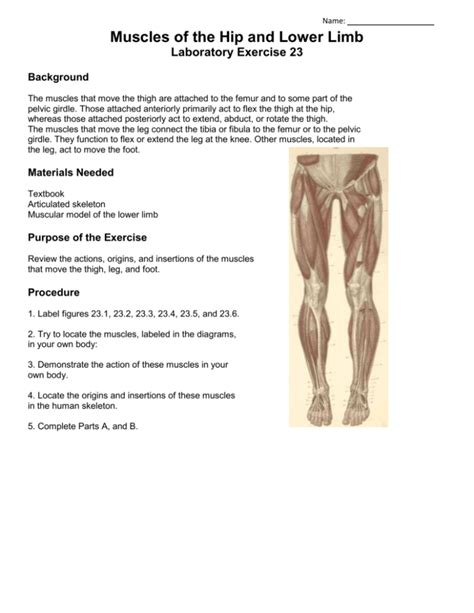 muscles of the hip and lower limb lab 23 reactions