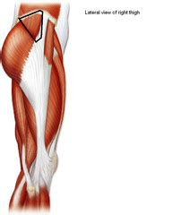 muscles of the hip and lower limb quizlet vocabulary test