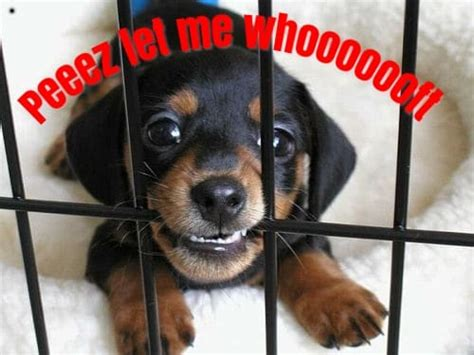 My Puppy Wont Stop Barking In The Crate