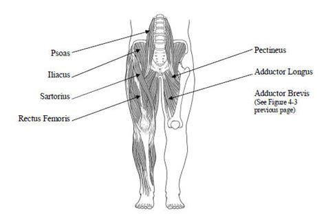 name of thigh hip flexor imageshack uploader phoneclaim