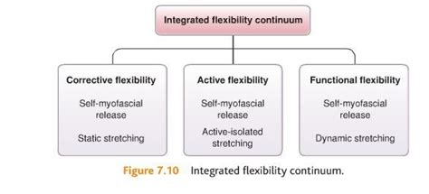 nms stretching for a hip flexor complex nasm opt phases