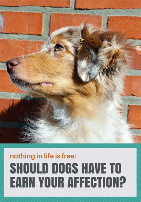 Nothing In Life Is Free Dog Training Tips