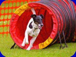 Nuneaton Dog Training Agility