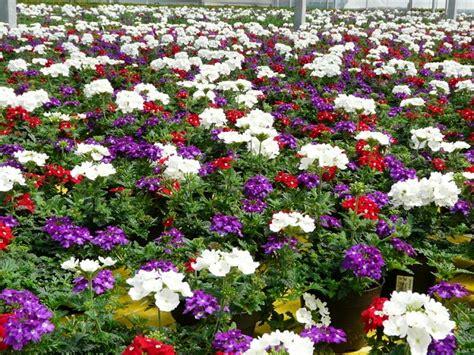 Olerum Pflanzen Versand