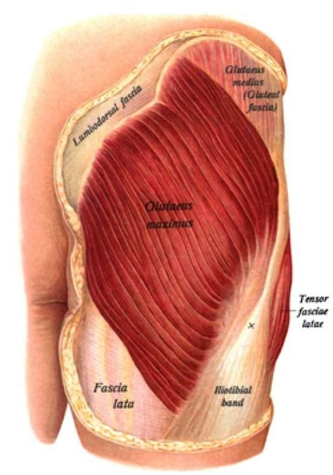 pain in hip flexor and gluteal muscles injection sites