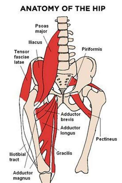 pain in hip flexor and glutes and hamstrings on skeleton hand