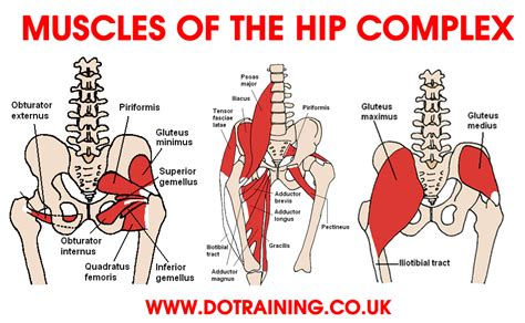 pain in hip flexor and glutes workout muscles diagram