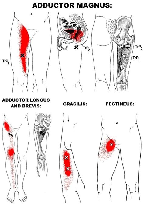 pain in hip flexors adduction of scapula muscles