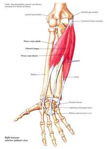 pain in hip flexors and extensors muscles of the forearm