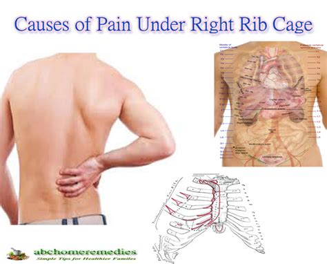 pain in right side under rib cage towards back