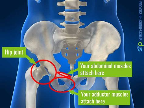 pain in the hip and groin in women