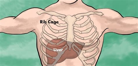 pain right side below ribs liver