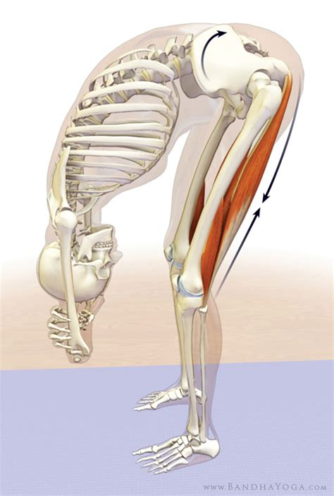 painful tight hamstrings yoga anatomy