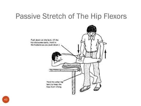 passive hip flexor stretch instructions for schedule c