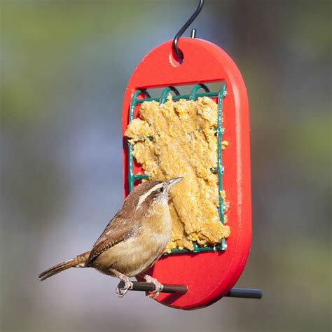 peanut butter bird feeder alternative