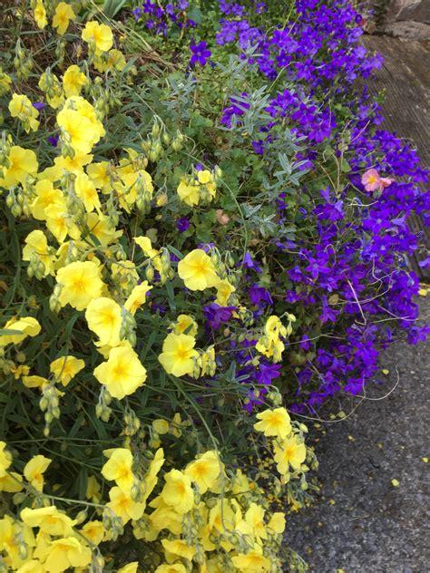 Perennials Sun Bloom All Summer