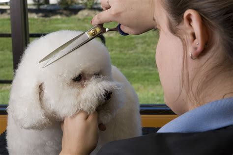 Petsmart Training For Dog Grooming