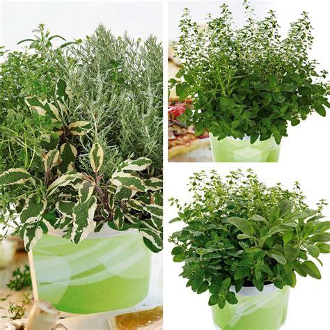 Pflanzen Bestellen Green