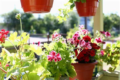 Pflanzen Für Schattigen Balkon