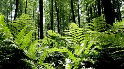 Pflanzen Im Wald