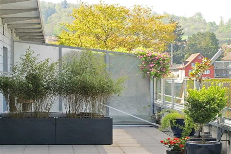 Pflanzen Kübel Sichtschutz
