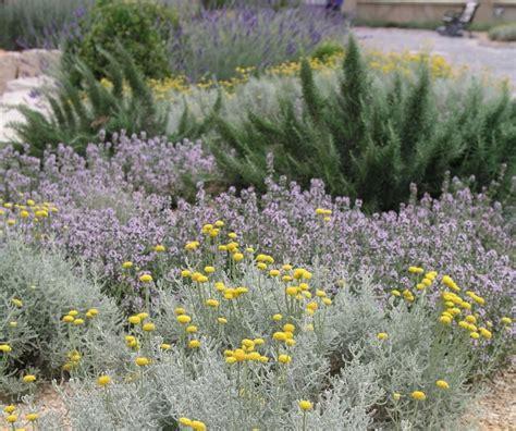 Pflanzen Ohne Gießen