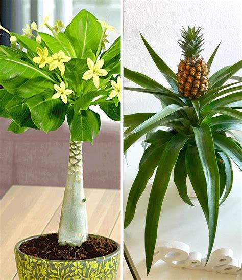 Pflanzen Online Shop Vergleich