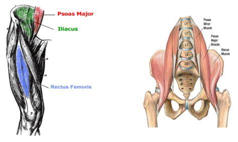 picture of hip flexor lifnodes