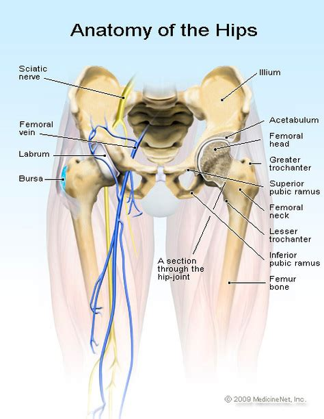 pictures of tendons in hip area pain bursitis of the knee