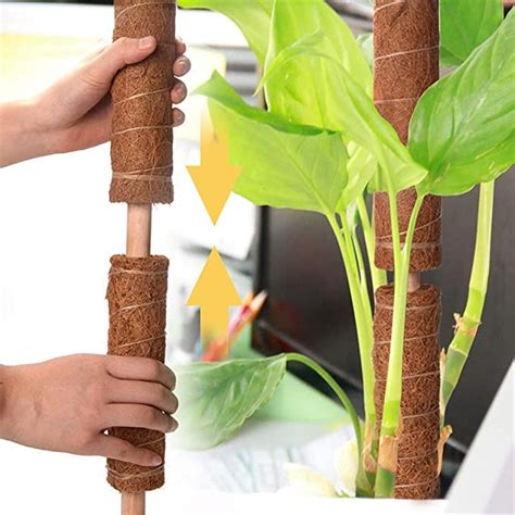 Plant Support Pole
