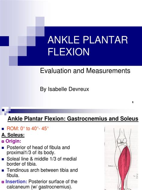 plantar flexion muscle grading tests