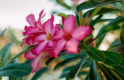 Plante A Fleur Rose