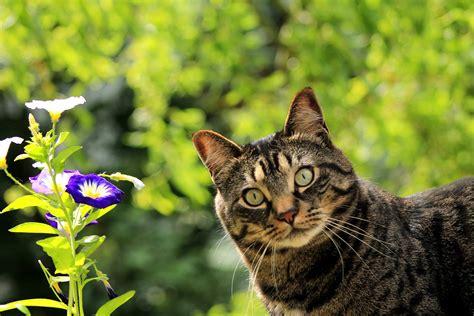 Planten Giftig Katten