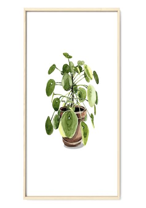 Poster Pflanzen