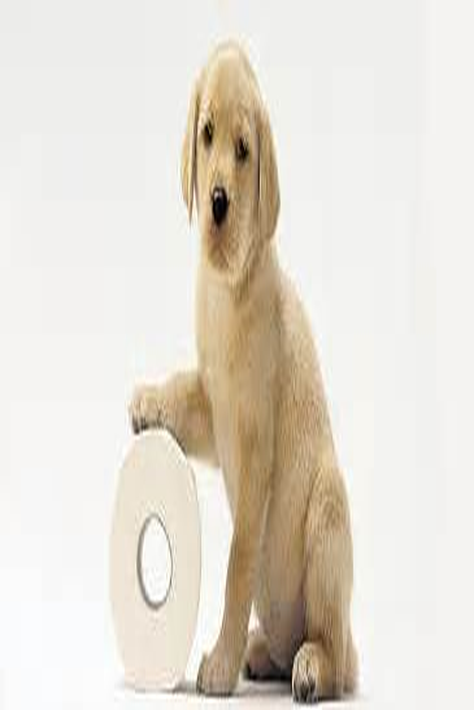 Potty Training Regression Dog
