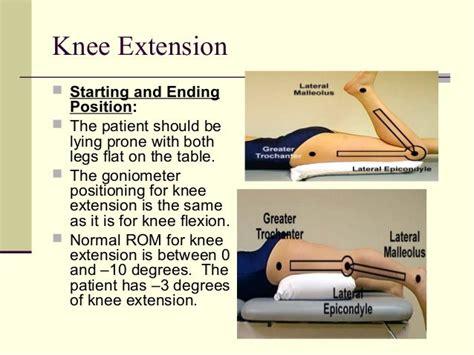 primary flexor of hip when knee extended measuring cylinder