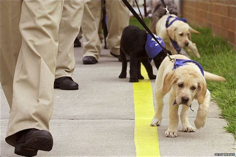 Prisoners Training Guide Dogs