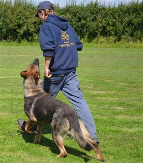 protection dog training equipment uk
