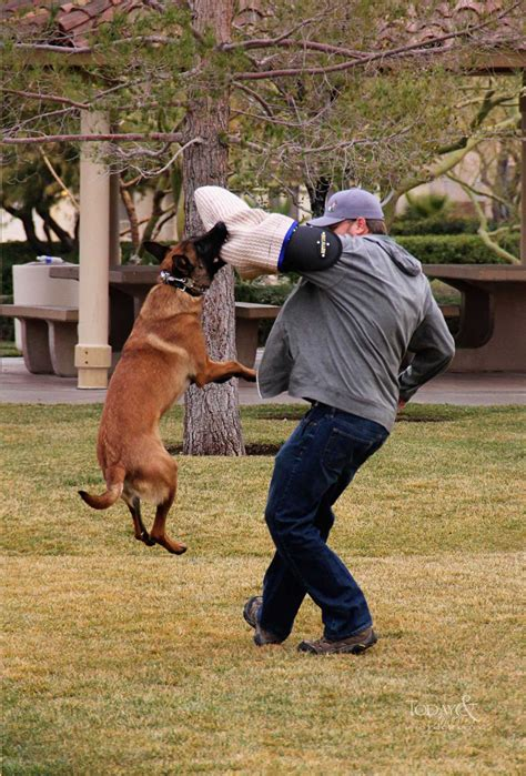 protection dog training san antonio