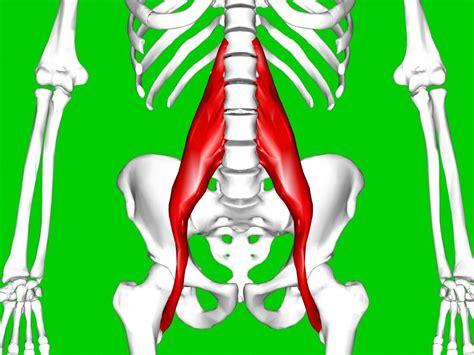 psoas and deep hip flexors