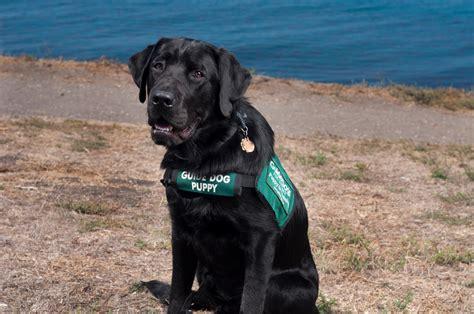 Ptsd Dog Training Kansas