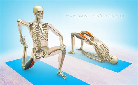 pulled flexor muscle rectus femoris stretches for lower
