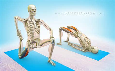 pulled flexor muscle rectus femoris stretches for sciatica