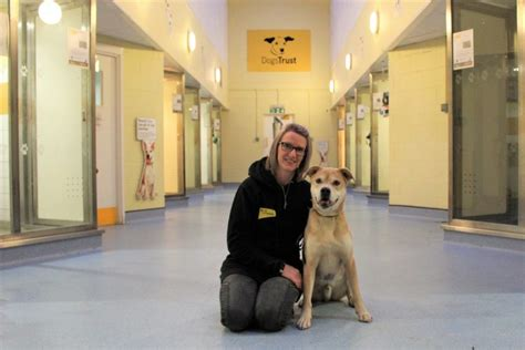 puppy and dog training coventry