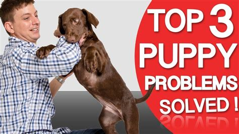 puppy training chewing and biting