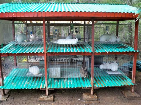 rabbits cages design