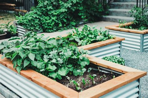 raised beds for gardening designs