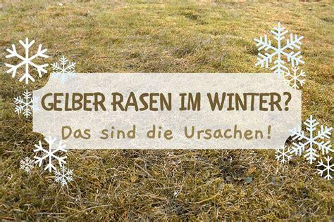 Rasen Im Winter Gelb