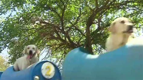 Rescue Dog Train Fort Worth